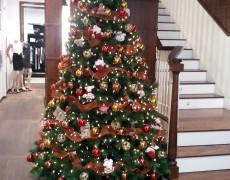 Árboles de Navidad para interior