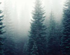 Origen del árbol de Navidad: NAVIDAD 2017